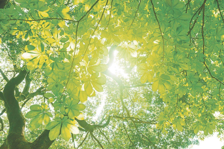 Gesunde, grüne Baumkronen - ohne Pflanzenschutz wohl kaum möglich.
