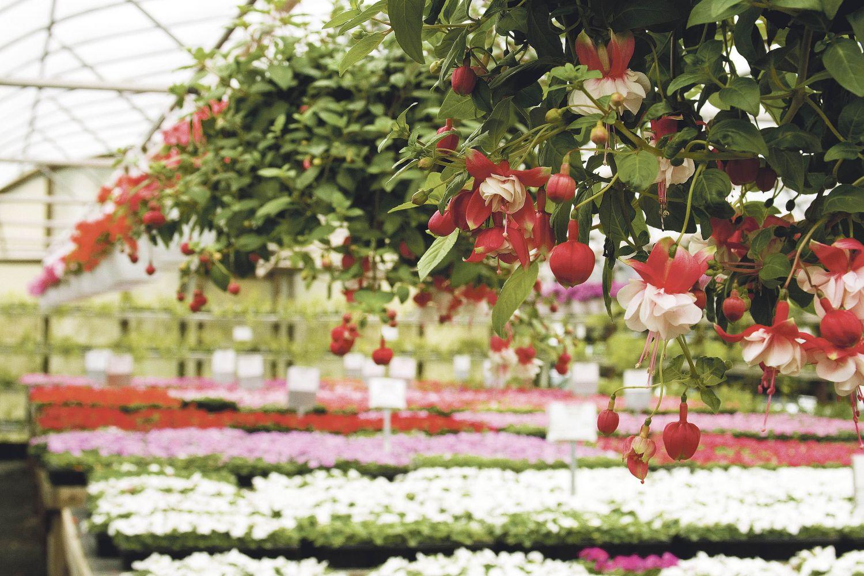 Blumen in einer Gärtnerei