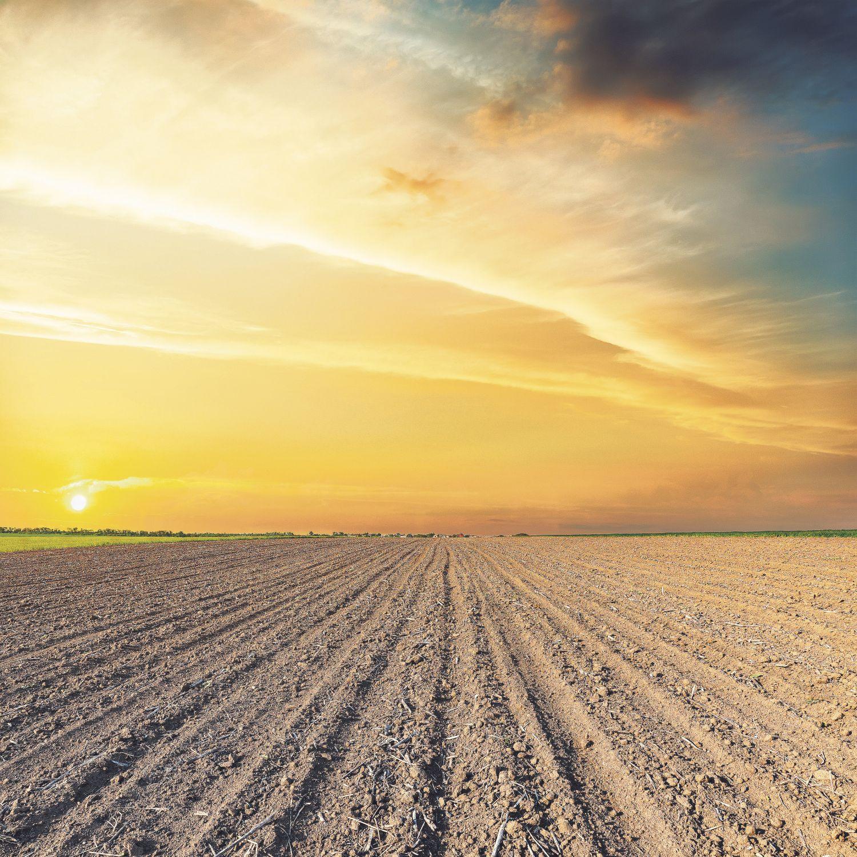 Leerer Acker vor Sonnenuntergangshimmel, Thema: Sicherung der Welternährung