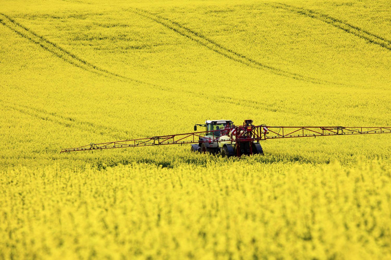 Eine Mähmaschine im Rapsfeld. Agrarenergie spielt eine immer größere Rolle für die deutschen Bauern.