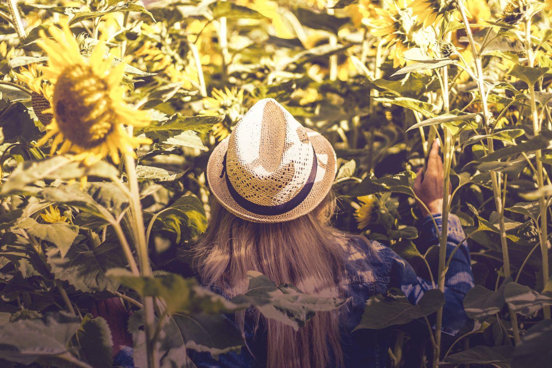Junge Frau geht in ein Sonnenblumenfeld. Thema: Strukturwandel auf dem Bauernhof