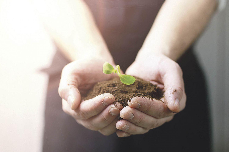 Ein Mensch hält einen Pflanzenspross in seinen Händen. Thema: Wetterrisiken
