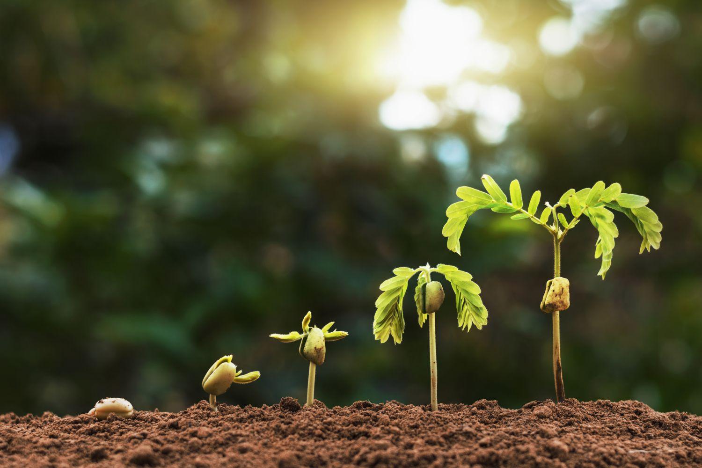 Eine Pflanze in ihren unterschiedlichen Entwicklungsstufen. Thema: Pflanzenschutz