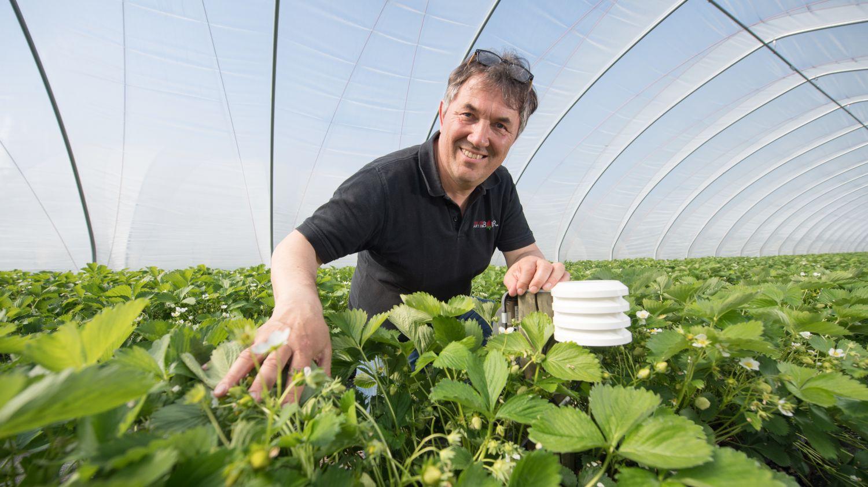 Landwirt Martin Bauer auf einem Erdbeerfeld