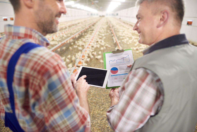 Zwei Männer mit Tablet und Klemmbrett im Hühnerstall