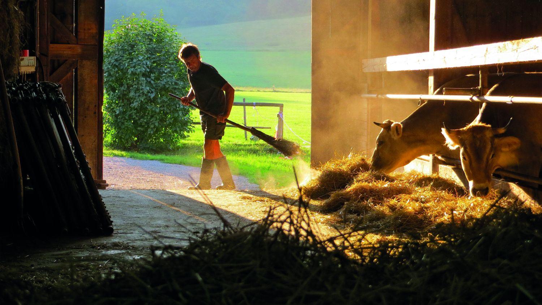 Ein Bauer fegt mit einem Reisigbesen den Stall aus
