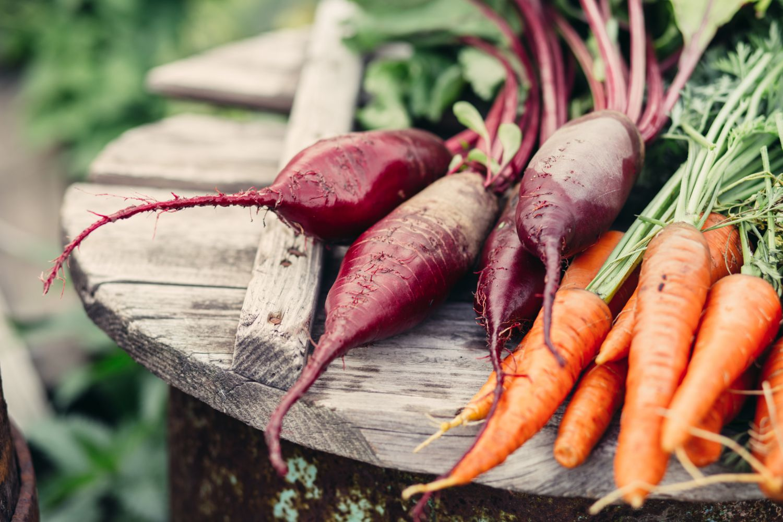 Rüben und Möhren aus biologischem Landbau: konventionelle Lebensmittel können bei der Qualität mit Bio-Produkten teils mithalten