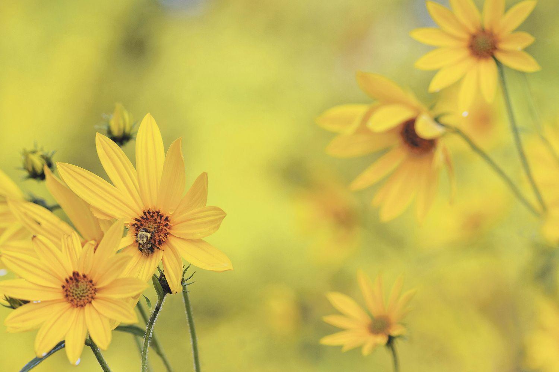 Wiesenblumen, Thema: Biodiversität